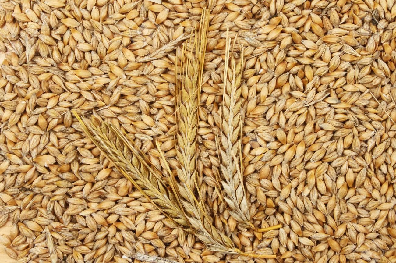 Trigo y cebada, nueva apuesta fuerte en granos gruesos