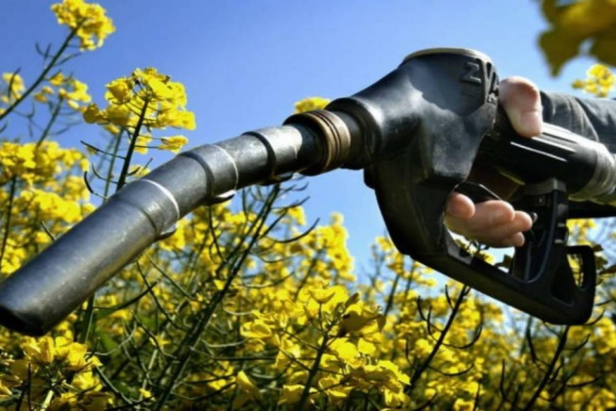 Productoras de biocombustibles esperan más aumentos