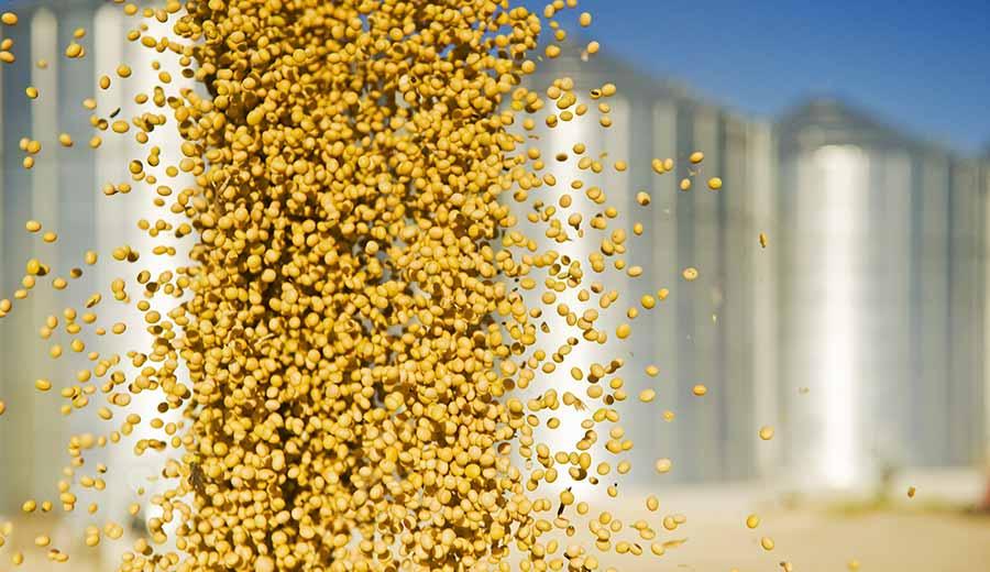 A centavos de US$ 400 la tonelada quedó la soja