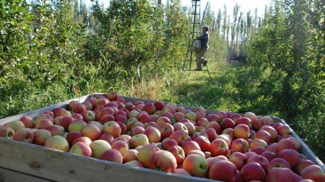 Río Negro pidió una reunión urgente por la crisis frutícola