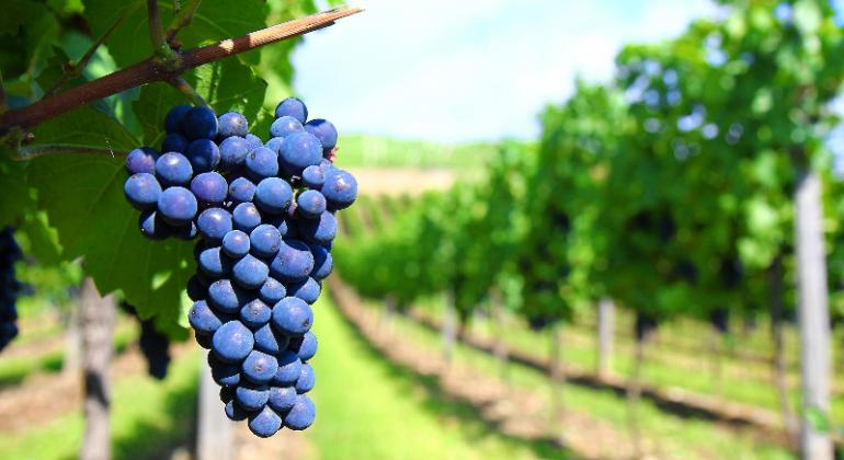 ¿Es posible aumentar las exportaciones agroindustriales?
