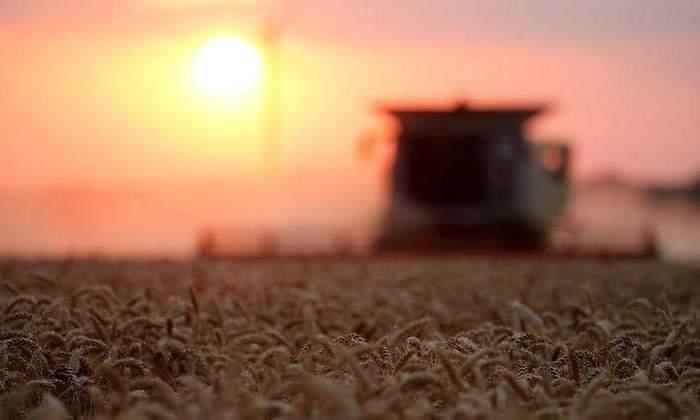 Bajan la proyección de la cosecha de trigo por el clima adverso