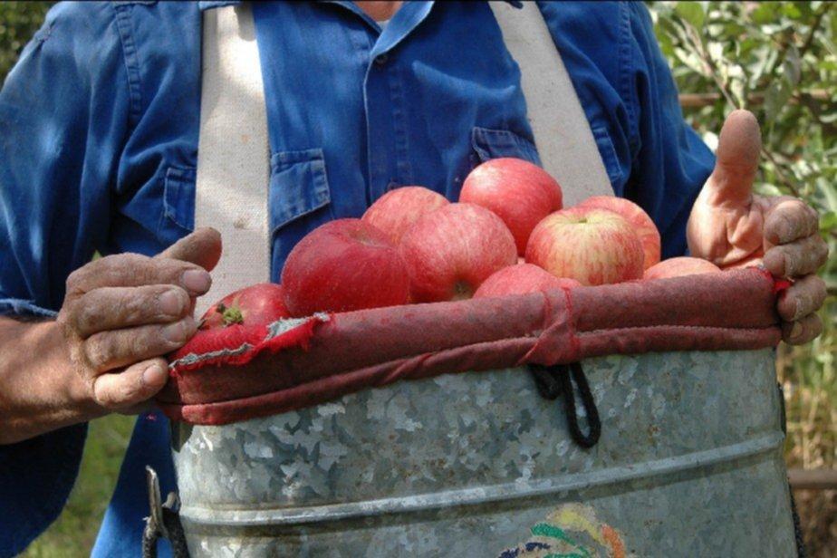 La CNV autorizó la salida al mercado de nuevos FCI,  para economías regionales