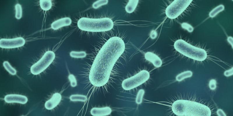 Bacterias que ayudan a reciclar los residuos electrónicos