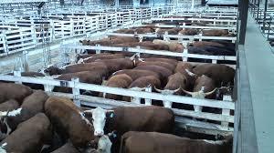 Ruralistas esperan la oficialización que les permita la exportación de carne