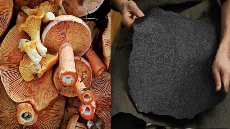 Producen material similar al cuero a partir de un hongo Filamentoso