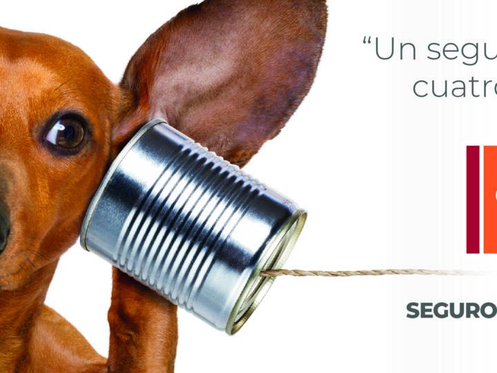 """""""Un seguro online de cuatro patas…"""" Galicia Seguros presenta su nuevo plan para mascotas"""