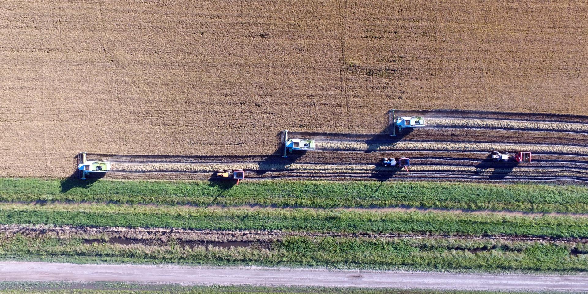 Tramo final para la siembra de la soja y el maíz