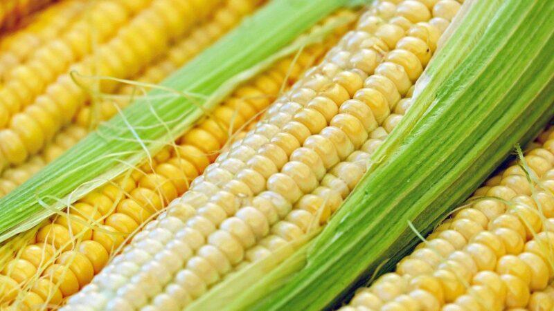 El tope a la exportación de maíz podría extender el paro del campo