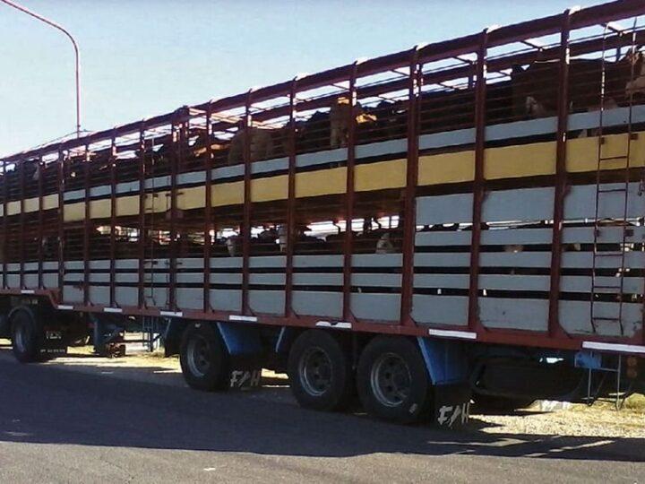 Faena de bovinos creció 3,8% en febrero