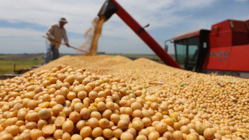 Producción de granos será de 129,8 millones Ton