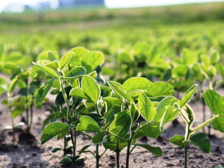 Productores pasarán al agro tierras dedicadas a ganadería