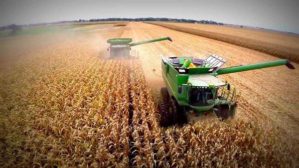 Ingresos por exportaciones de maíz serían récord