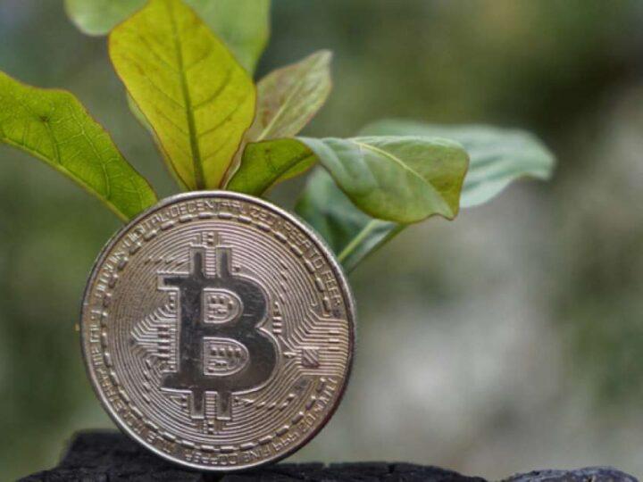 Musk quiere que bitcoin utilice 50% de energía limpia