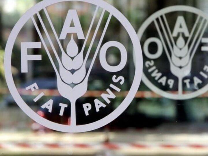 Índice FAO:  Los precios de los alimentos en América del Latina están en niveles altos
