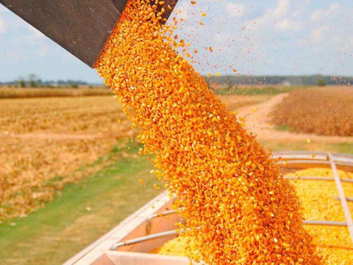 El Gobierno le pone un cepo a la exportación de maíz