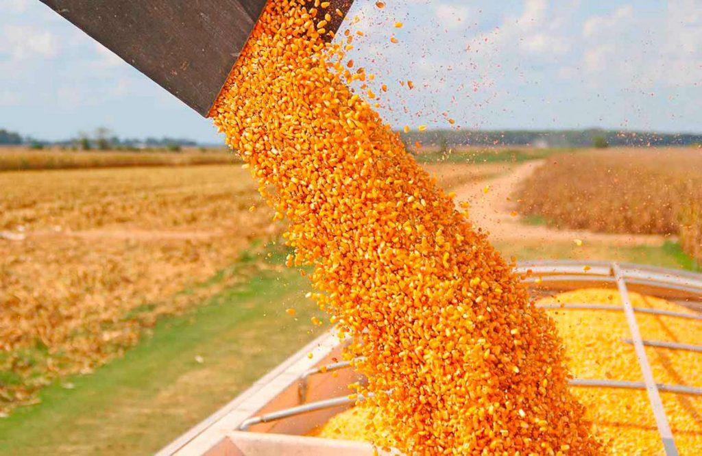 El maíz es el cultivo más rentable del país, por delante de la soja y del trigo